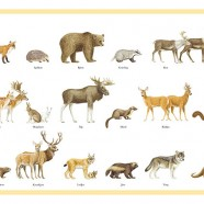 Swedish Wild Animals- Kids Placemat in melamin